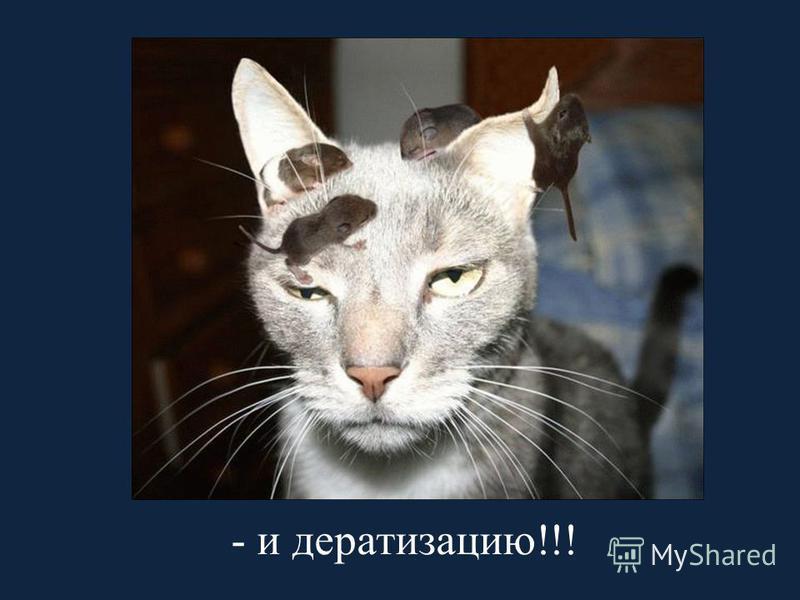 - и дератизацию!!!