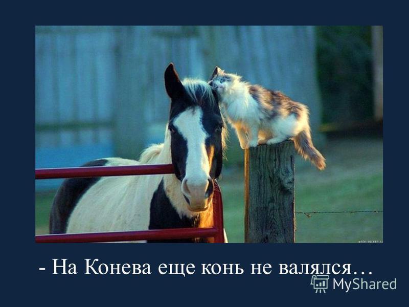 - На Конева еще конь не валялся…