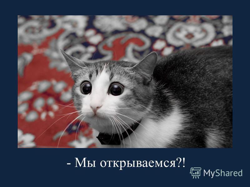 - Мы открываемся?!