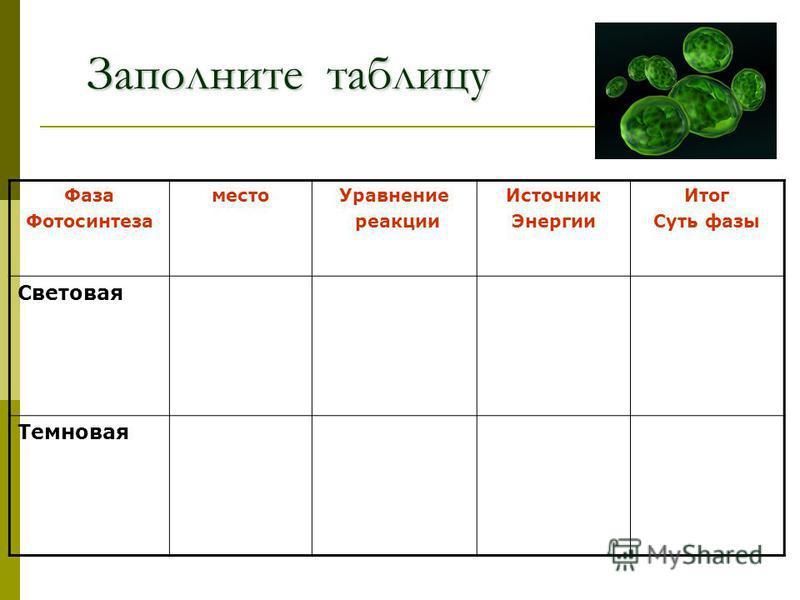 Заполните таблицу Фаза Фотосинтеза место Уравнение реакции Источник Энергии Итог Суть фазы Световая Темновая