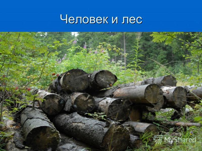 Человек и лес