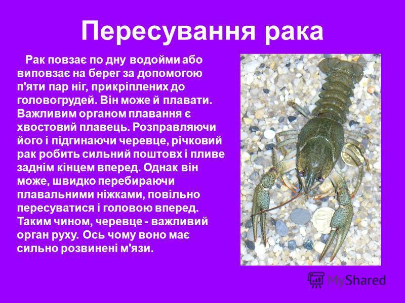 Рак повзає по дну водойми або виповзає на берег за допомогою п'яти пар ніг, прикріплених до головогрудей. Він може й плавати. Важливим органом плавання є хвостовий плавець. Розправляючи його і підгинаючи черевце, річковий рак робить сильний поштовх і