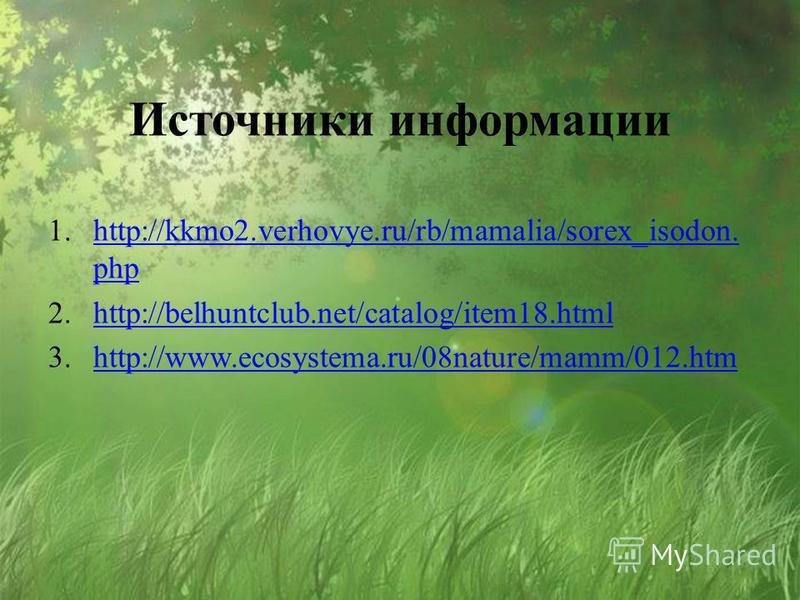 Источники информации 1.http://kkmo2.verhovye.ru/rb/mamalia/sorex_isodon. phphttp://kkmo2.verhovye.ru/rb/mamalia/sorex_isodon. php 2.http://belhuntclub.net/catalog/item18.htmlhttp://belhuntclub.net/catalog/item18. html 3.http://www.ecosystema.ru/08nat