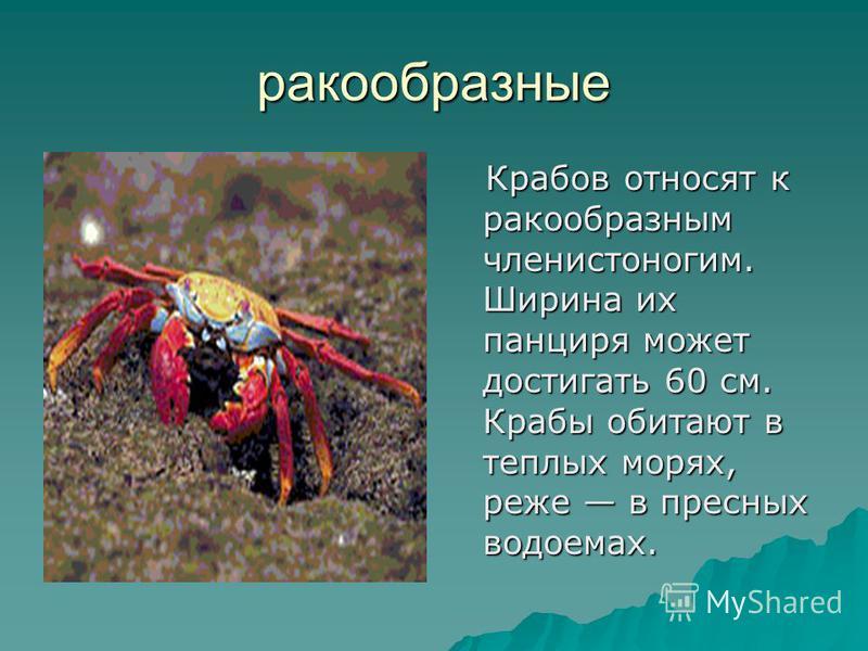 ракообразные Крабов относят к ракообразным членистоногим. Ширина их панциря может достигать 60 см. Крабы обитают в теплых морях, реже в пресных водоемах. Крабов относят к ракообразным членистоногим. Ширина их панциря может достигать 60 см. Крабы обит