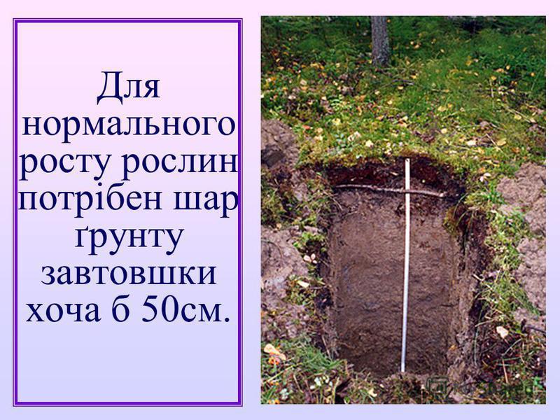 Для нормального росту рослин потрібен шар ґрунту завтовшки хоча б 50см.
