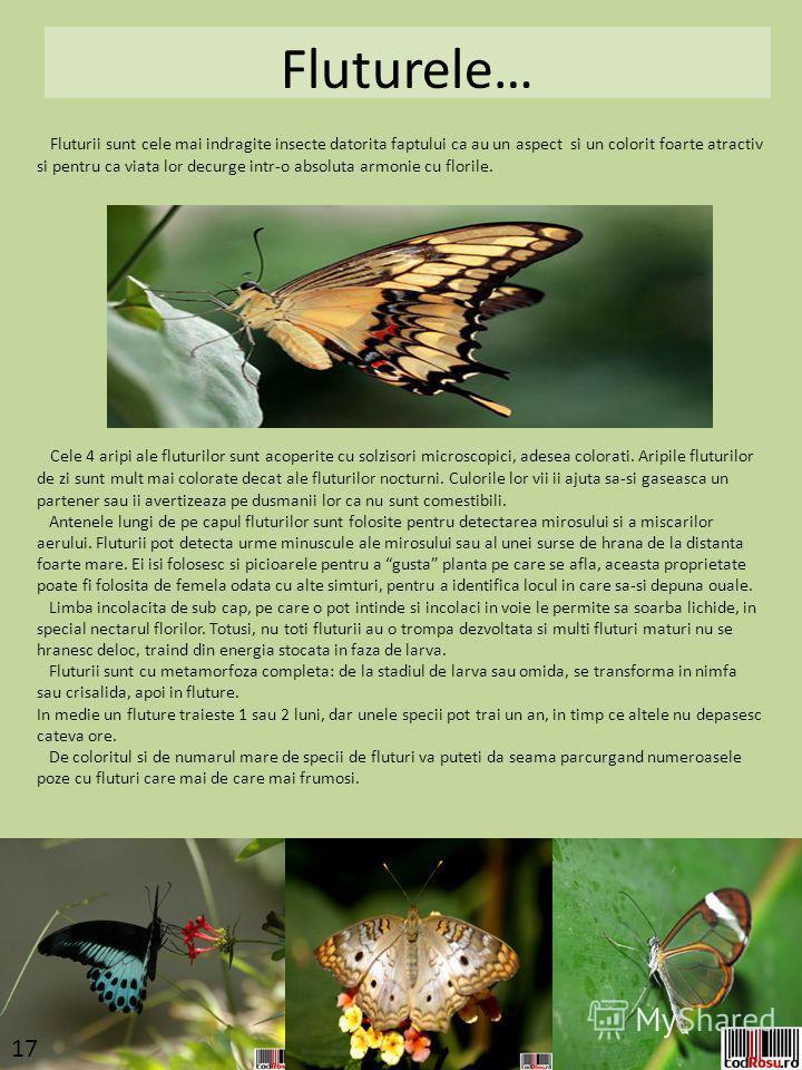 Fluturele… Fluturii sunt cele mai indragite insecte datorita faptului ca au un aspect si un colorit foarte atractiv si pentru ca viata lor decurge intr-o absoluta armonie cu florile. Cele 4 aripi ale fluturilor sunt acoperite cu solzisori microscopic