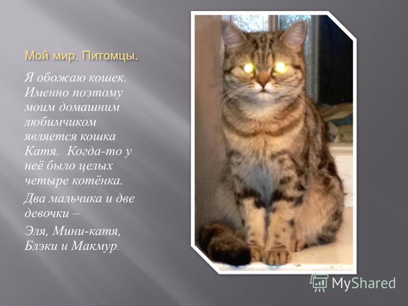Мой мир. Питомцы. Я обожаю кошек. Именно поэтому моим домашним любимчиком является кошка Катя. Когда - то у неё было целых четыре котёнка. Два мальчика и две девочки – Эля, Мини - катя, Блэки и Макмур.