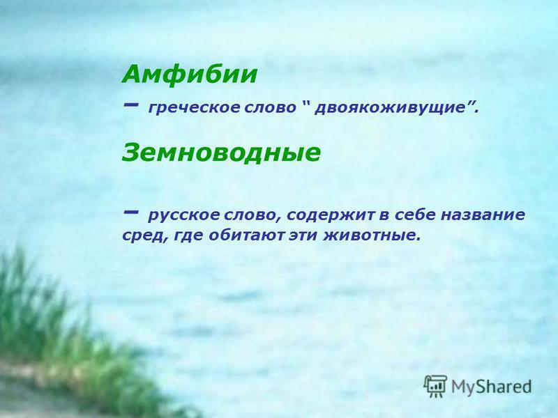 Амфибии – греческое слово двоякоживущие. Земноводные – русское слово, содержит в себе название сред, где обитают эти животные.