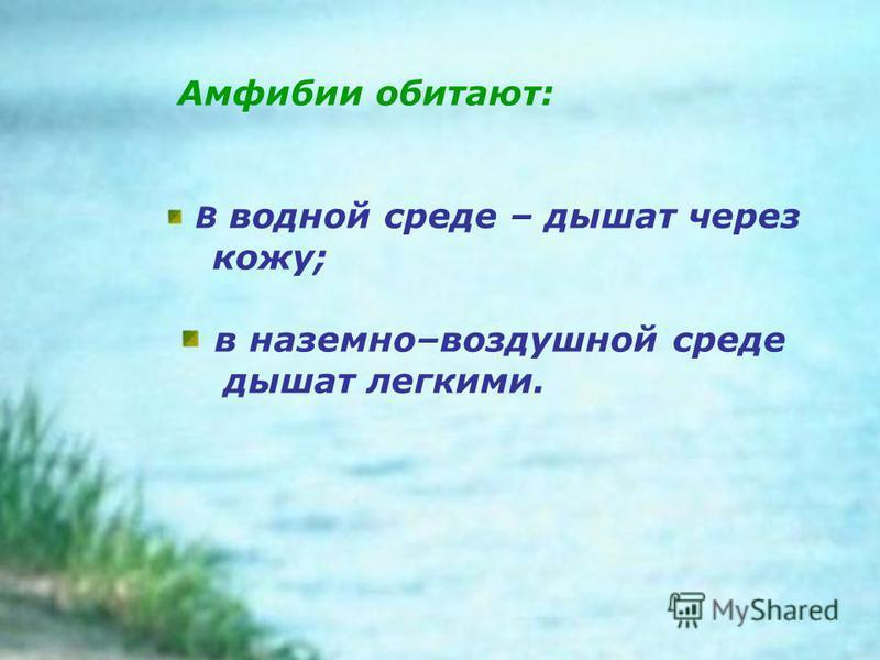 Амфибии обитают: В водной среде – дышат через кожу; в наземно–воздушной среде дышат легкими.