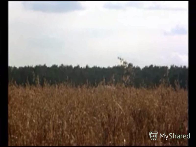 Уривок з фільму М. Михалкова Утомленные солнцем»