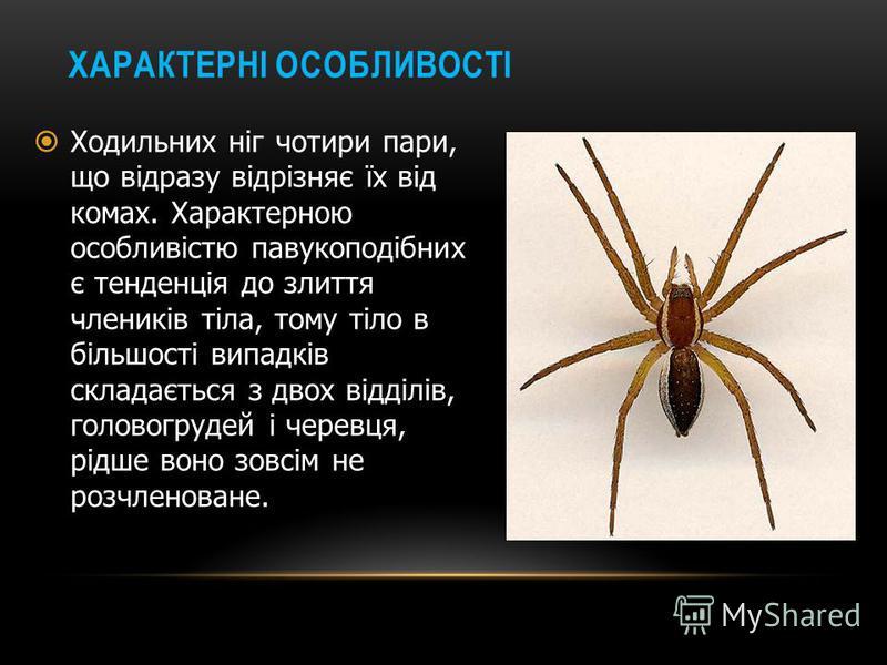 ПАВУКОПОДІБНІ Клас членистоногих з підтипу хеліцерових. Найбільш відомі представники: павуки, скорпіони, кліщі. Латинська назва павукоподібних походить від грецького «Spider» -