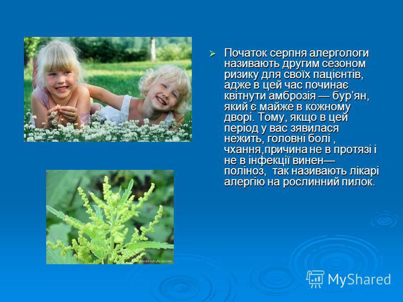 Початок серпня алергологи називають другим сезоном ризику для своїх пацієнтів, адже в цей час починає квітнути амброзія бурян, який є майже в кожному дворі. Тому, якщо в цей період у вас зявилася нежить, головні болі, чхання,причина не в протязі і не