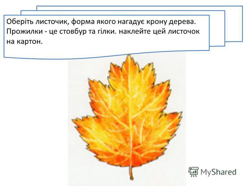 Оберіть листочик, форма якого нагадує крону дерева. Прожилки - це стовбур та гілки. наклейте цей листочок на картон.