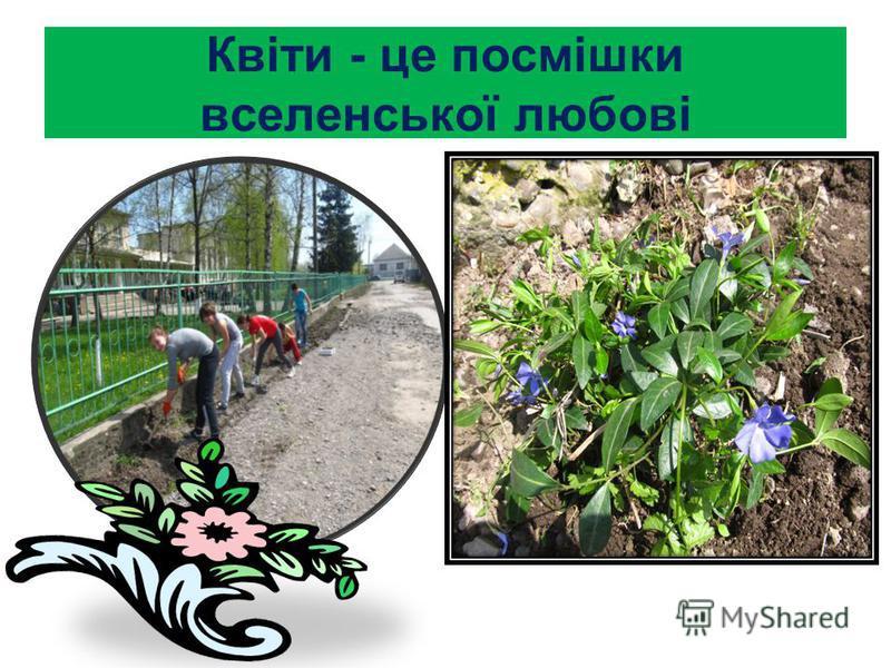 Квіти - це посмішки вселенської любові