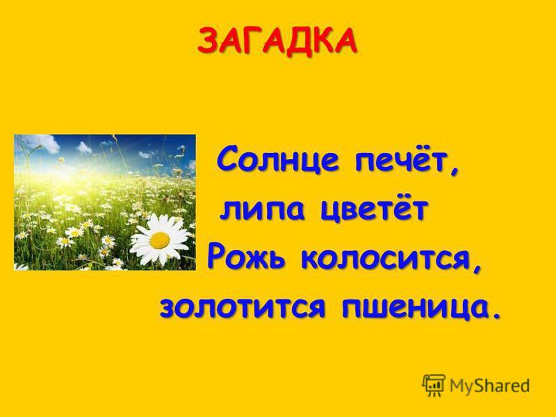 ЗАГАДКА Солнце печёт, липа цветёт Рожь колосится, Рожь колосится, золотится пшеница. золотится пшеница.