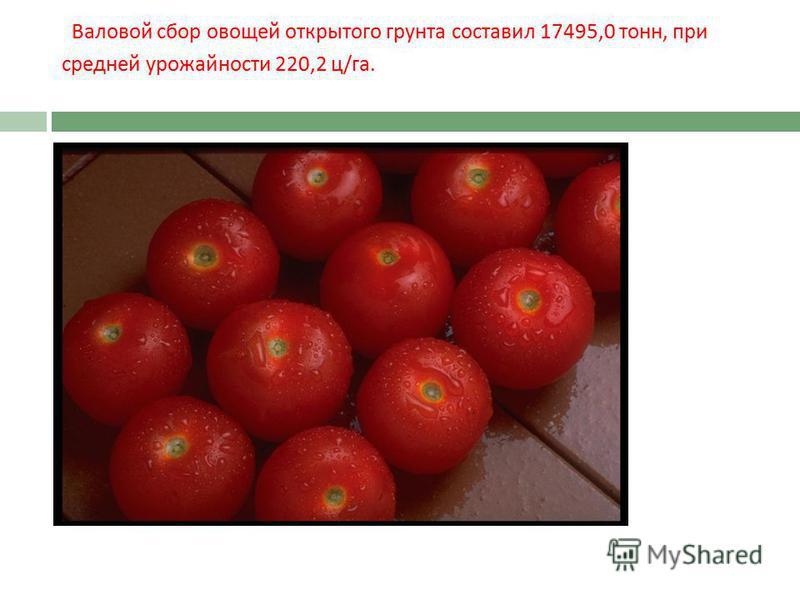 Валовой сбор овощей открытого грунта составил 17495,0 тонн, при средней урожайности 220,2 ц / га.