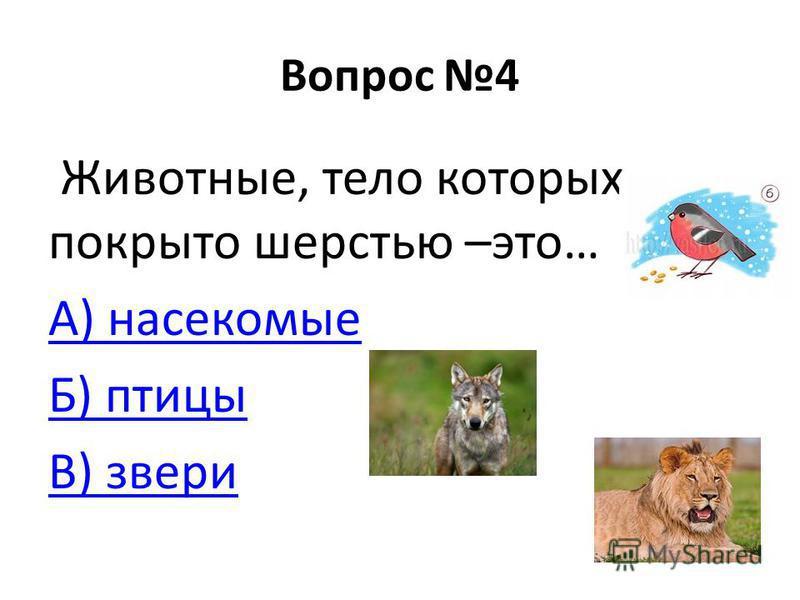 Вопрос 4 Животные, тело которых покрыто шерстью –это… А) насекомые Б) птицы В) звери