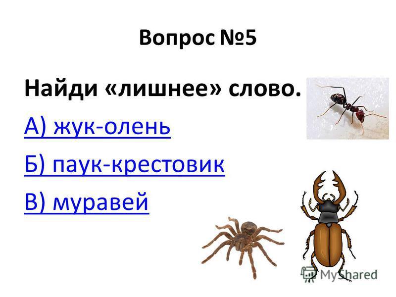 Вопрос 5 Найди «лишнее» слово. А) жук-олень Б) паук-крестовик В) муравей