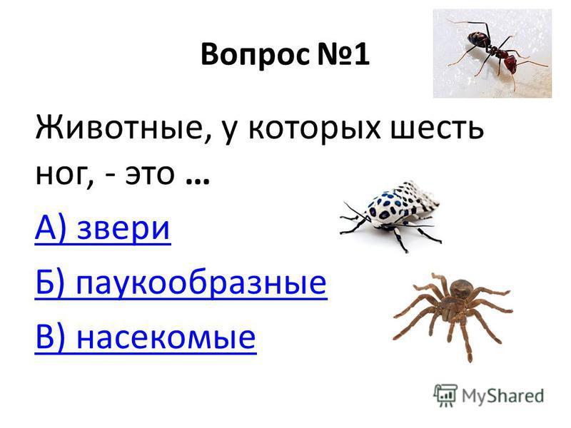 Вопрос 1 Животные, у которых шесть ног, - это … А) звери Б) паукообразные В) насекомые