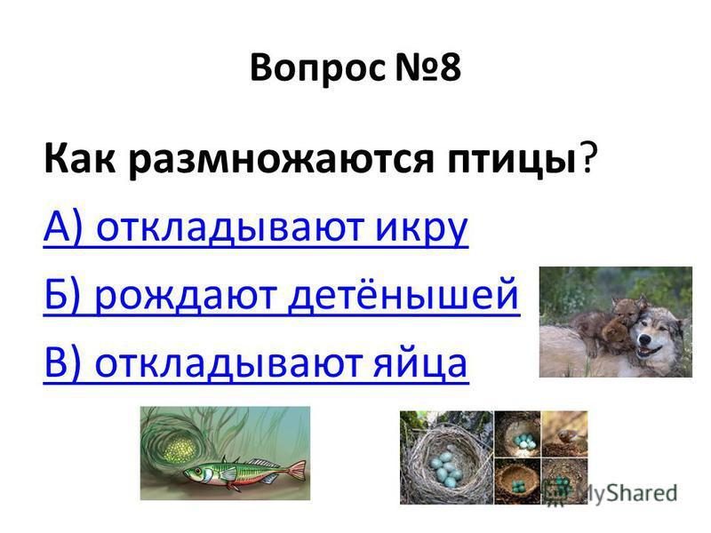 Вопрос 8 Как размножаются птицы? А) откладывают икру Б) рождают детёнышей В) откладывают яйца