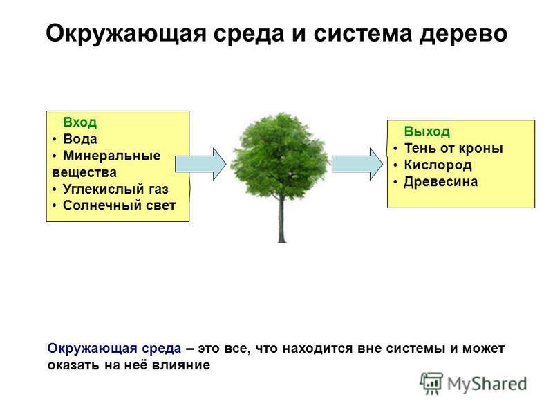 Окружающая среда и система дерево Вход Вода Минеральные вещества Углекислый газ Солнечный свет Выход Тень от кроны Кислород Древесина Окружающая среда – это все, что находится вне системы и может оказать на неё влияние