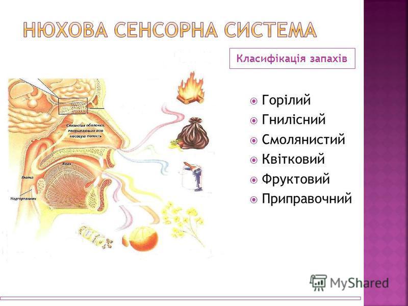 Класифікація запахів Горілий Гнилісний Смолянистий Квітковий Фруктовий Приправочний