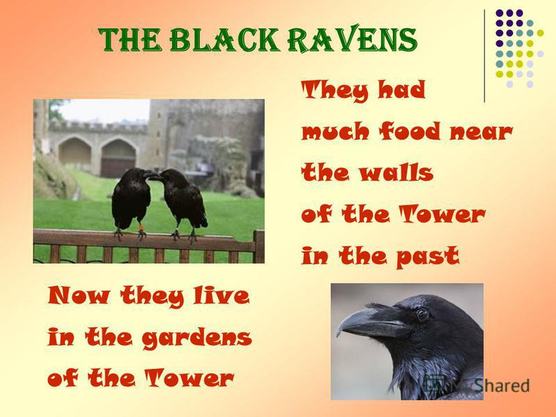 The black ravens Now they live in the gardens of the Tower They had much food near the walls of the Tower in the past
