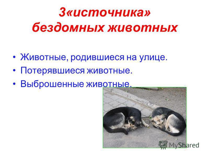 3«источника» бездомных животных Животные, родившиеся на улице. Потерявшиеся животные. Выброшенные животные.