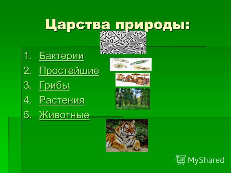 Царства природы: 1. Бактерии Бактерии 2. Простейшие Простейшие 3. Грибы Грибы 4. Растения Растения 5. Животные Животные