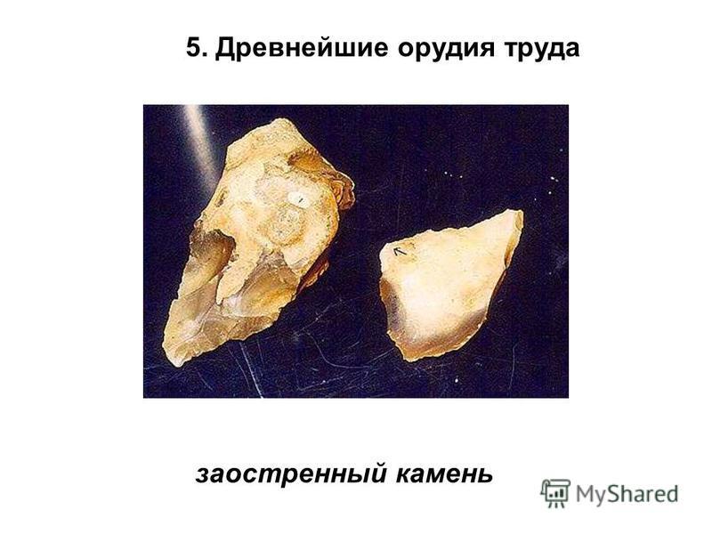 5. Древнейшие орудия труда заостренный камень