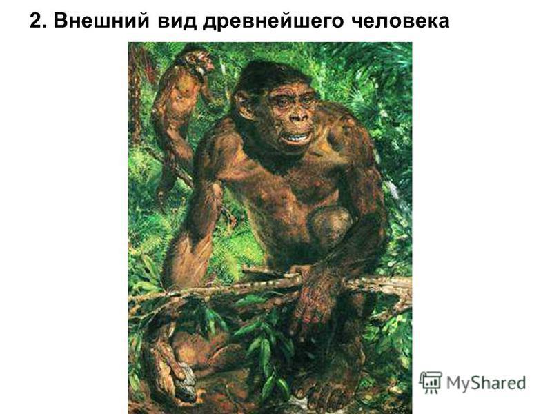 2. Внешний вид древнейшего человека