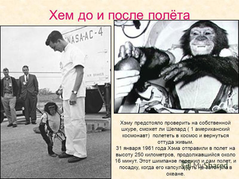 Хем до и после полёта Хэму предстояло проверить на собственной шкуре, сможет ли Шепард ( 1 американский космонавт) полететь в космос и вернуться оттуда живым. 31 января 1961 года Хэма отправили в полет на высоту 250 километров, продолжавшийся около 1