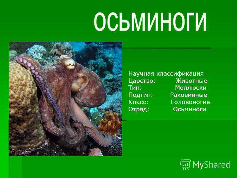 Научная классификация Царство:Животные Тип: Моллюски Подтип: Раковинные Класс: Головоногие Отряд: Осьминоги