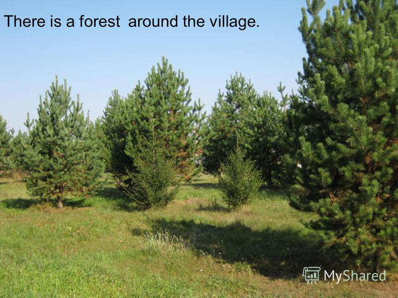 There is a forest around the village.