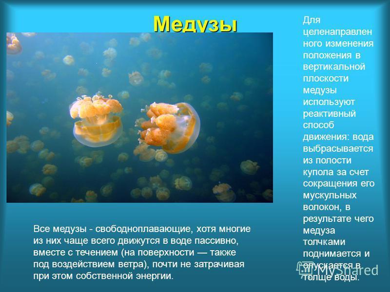 Медузы Для целенаправленного изменения положения в вертикальной плоскости медузы используют реактивный способ движения: вода выбрасывается из полости купола за счет сокращения его мускульных волокон, в результате чего медуза толчками поднимается и оп