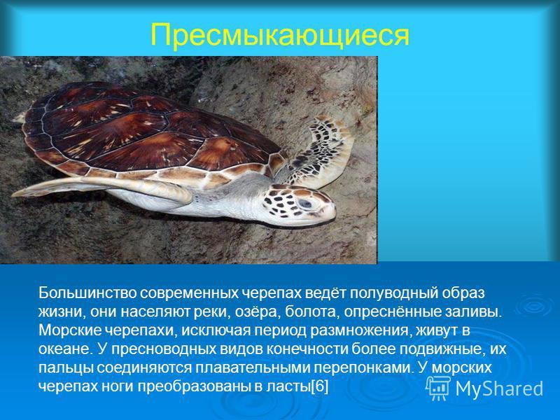 Пресмыкающиеся Большинство современных черепах ведёт полуводный образ жизни, они населяют реки, озёра, болота, опреснённые заливы. Морские черепахи, исключая период размножения, живут в океане. У пресноводных видов конечности более подвижные, их паль