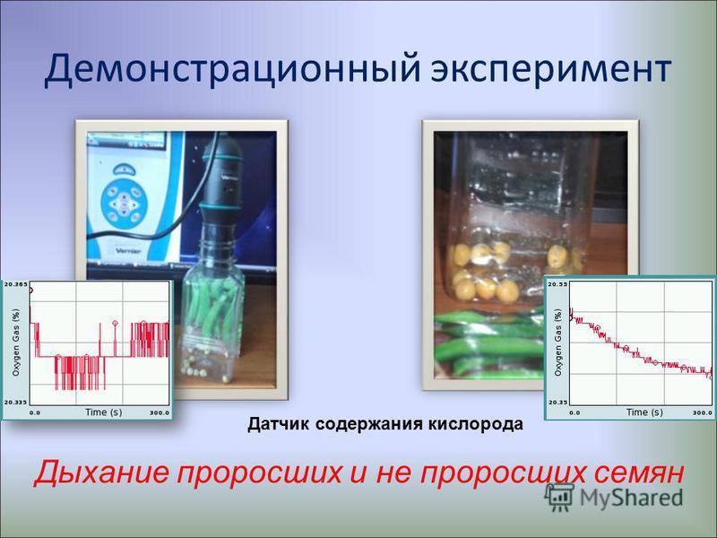 Демонстрационный эксперимент Дыхание проросших и не проросших семян Датчик содержания кислорода
