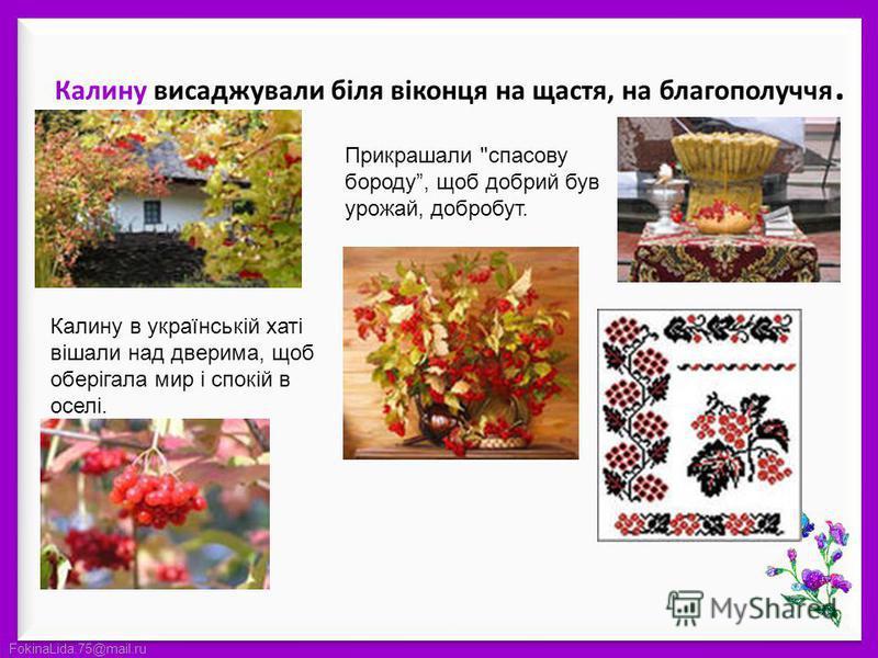 FokinaLida.75@mail.ru Калину висаджували біля віконця на щастя, на благополуччя. Калину в українській хаті вішали над дверима, щоб оберігала мир і спокій в оселі. Прикрашали спасову бороду, щоб добрий був урожай, добробут.