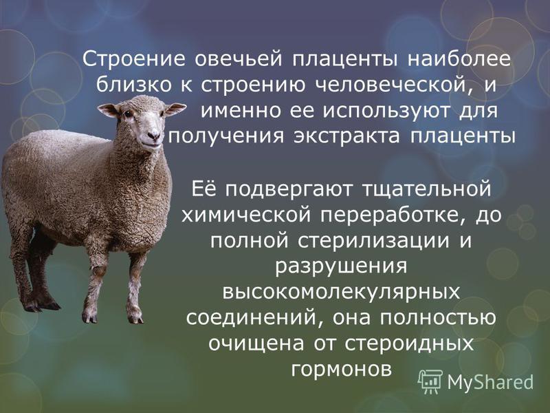 Строение овечьей плаценты наиболее близко к строению человеческой, и именно ее используют для получения экстракта плаценты Её подвергают тщательной химической переработке, до полной стерилизации и разрушения высокомолекулярных соединений, она полност
