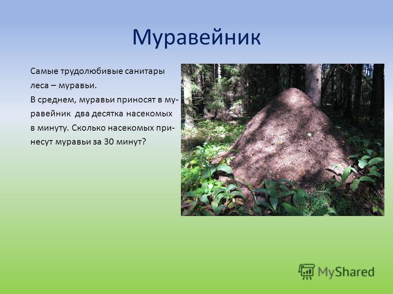 Муравейник Самые трудолюбивые санитары леса – муравьи. В среднем, муравьи приносят в муравейник два десятка насекомых в минуту. Сколько насекомых при- несут муравьи за 30 минут?
