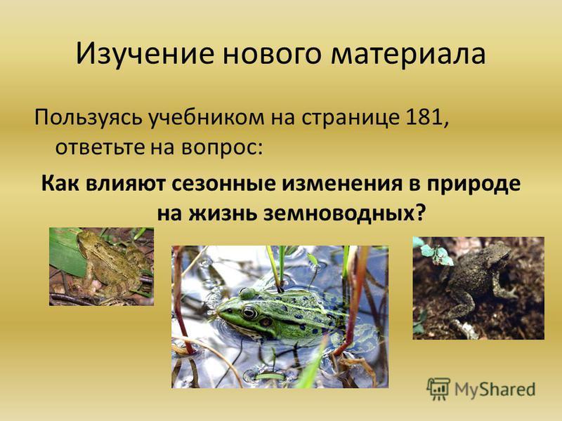 Изучение нового материала Пользуясь учебником на странице 181, ответьте на вопрос: Как влияют сезонные изменения в природе на жизнь земноводных?