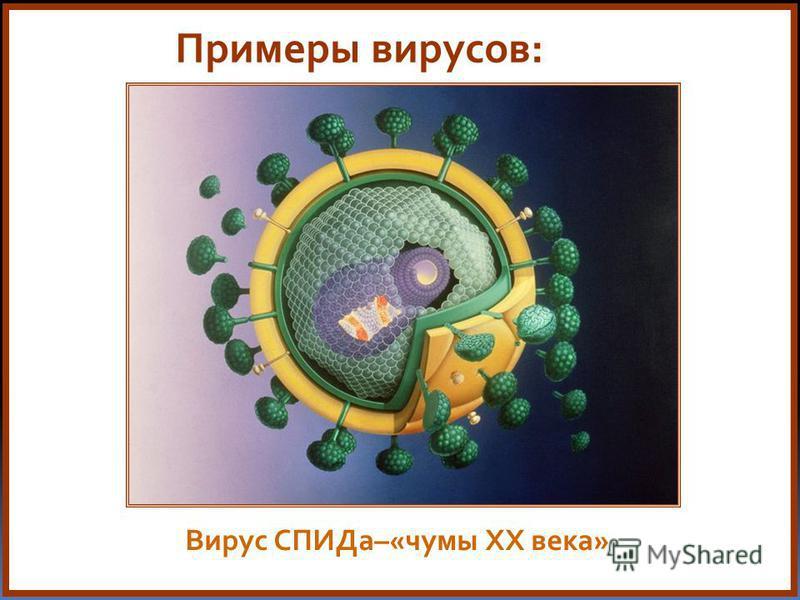 Примеры вирусов: Вирус СПИДа–«чумы XX века»