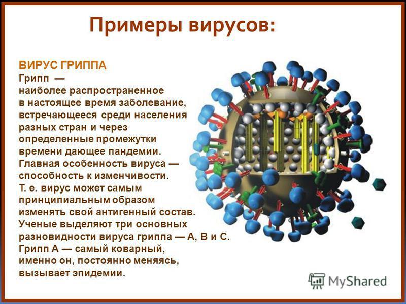 Примеры вирусов: ВИРУС ГРИППА Грипп наиболее распространенное в настоящее время заболевание, встречающееся среди населения разных стран и через определенные промежутки времени дающее пандемии. Главная особенность вируса способность к изменчивости. Т.