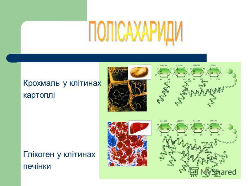 Полісахариди – складні біополімери, несолодкі на смак і нерозчинні у воді (С 6 Н 12 О 5 – )n: - різний склад мономерів - різна довжина і ступінь розгалуження - одні складаються із залишків одного й того самого самого моносахариду, інші – різних - мож