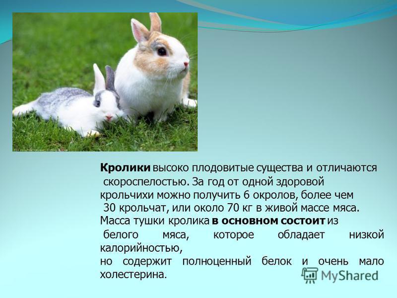 Кролики высоко плодовитые существа и отличаются скороспелостью. За год от одной здоровой крольчихи можно получить 6 окролов, более чем 30 крольчат, или около 70 кг в живой массе мяса. Масса тушки кролика в основном состоит из белого мяса, которое обл