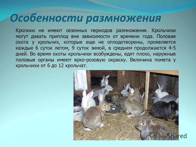 Особенности размножения Кролики не имеют сезонных периодов размножения. Крольчихи могут давать приплод вне зависимости от времени года. Половая охота у крольчих, которые еще не оплодотворены, проявляется каждые 6 суток летом, 9 суток зимой, в среднем