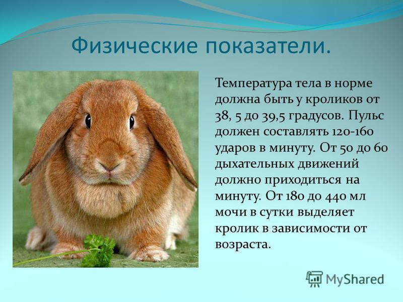 Физические показатели. Температура тела в норме должна быть у кроликов от 38, 5 до 39,5 градусов. Пульс должен составлять 120-160 ударов в минуту. От 50 до 60 дыхательных движений должно приходиться на минуту. От 180 до 440 мл мочи в сутки выделяет к