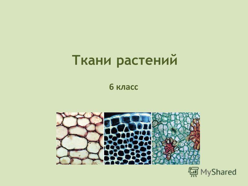 Ткани растений 6 класс