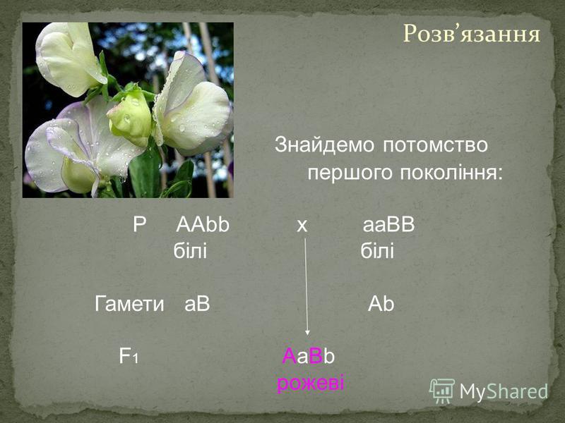 Знайдемо потомство першого покоління: Р AAbb х aaBВ білі білі Гамети aB Ab F 1 AaBb рожеві Розвязання