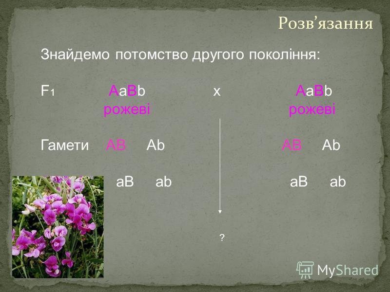 Знайдемо потомство другого покоління: F 1 AaBb х AaBb рожеві рожеві Гамети AB Ab AB Ab aB ab aB ab ? Розвязання
